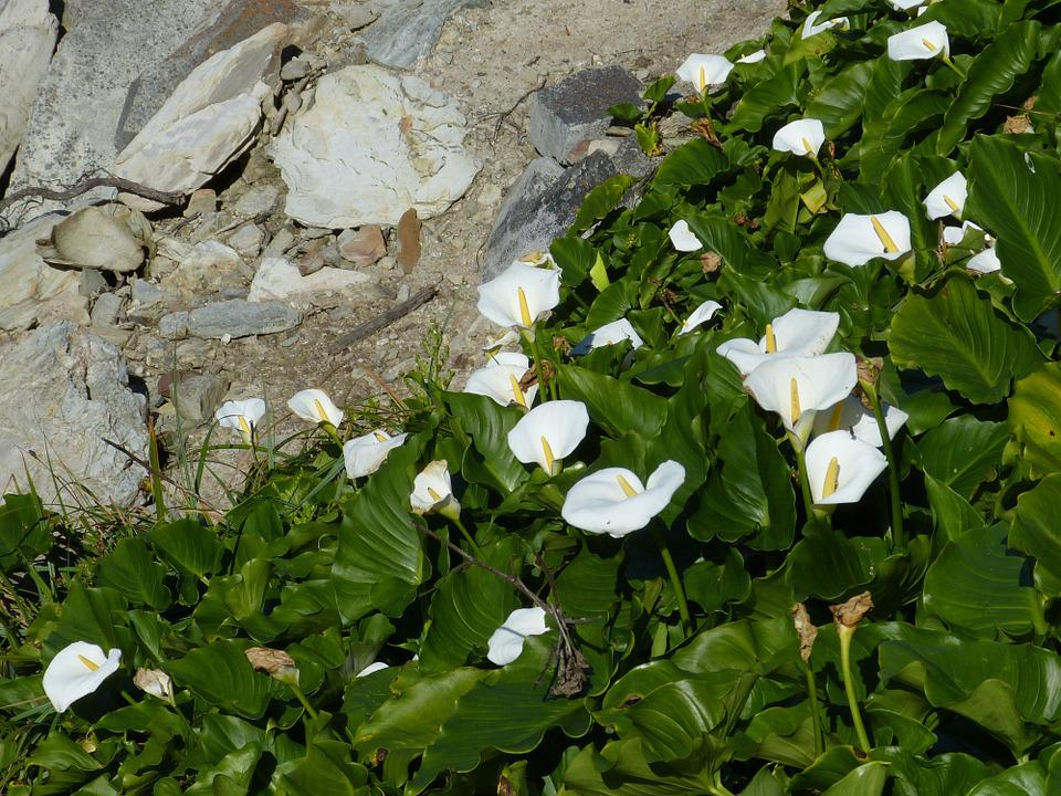 South Africa, Garden Route, Rock, Flower, Nature