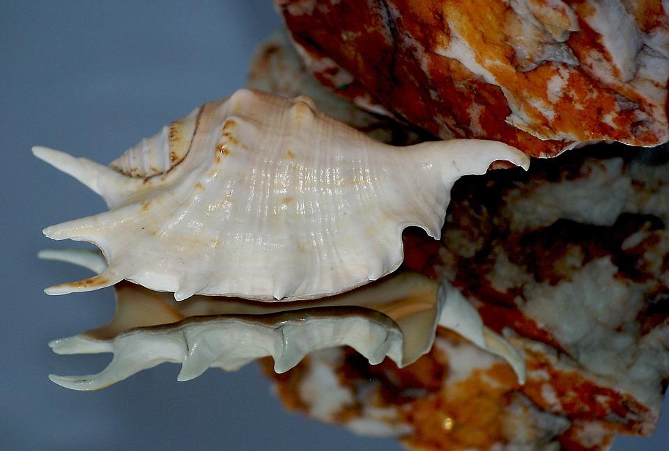 Seashell, Rock, Stone, Dappled, Texture, Invoice