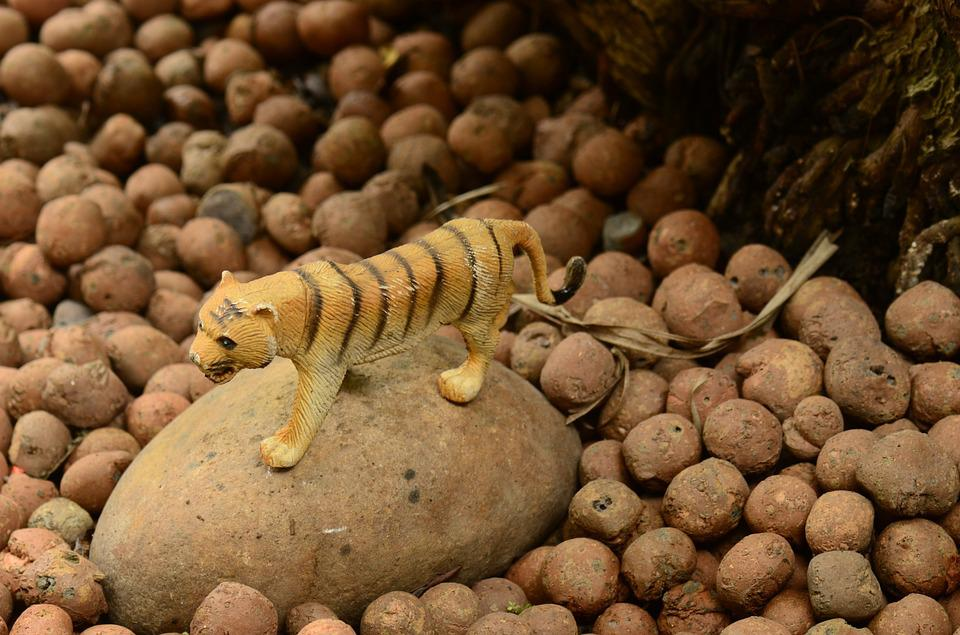 Tiger, Rock, Stones, Nature, Background, Toy, Plastic