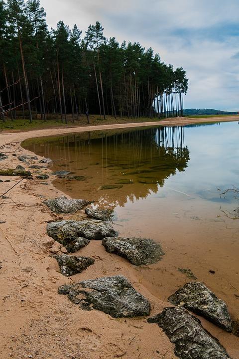 Water, Mirroring, Forest, Tree, Stones, Rock, Beach