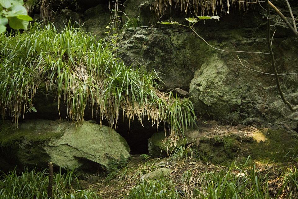 Moos, Rocks, Ferns, Earth, Fairy-tale, Fairy Tale