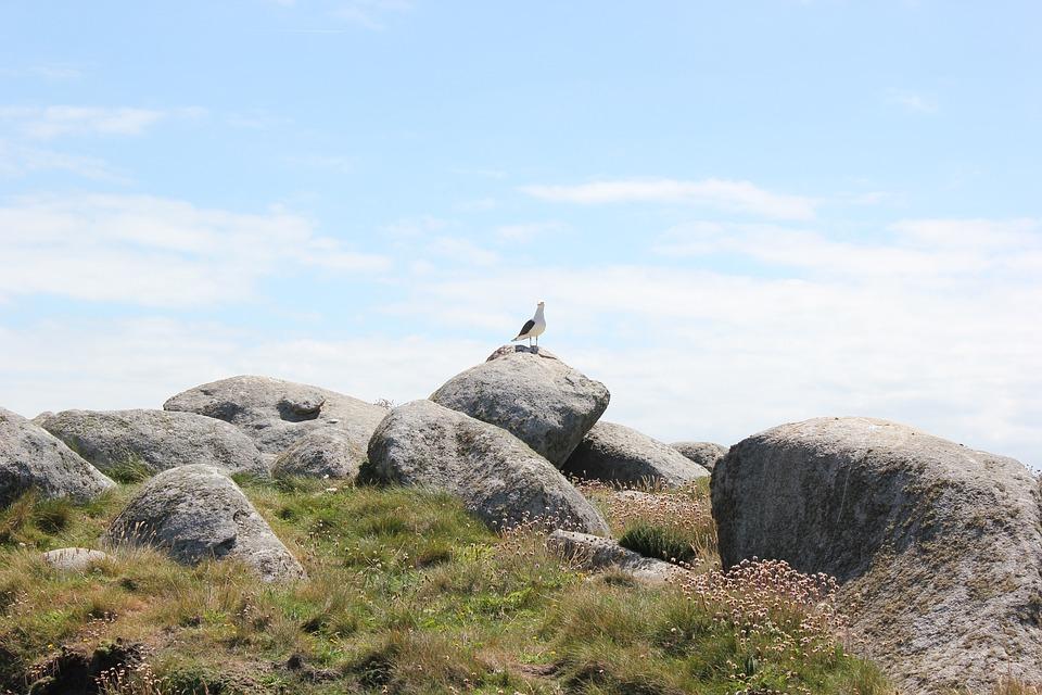 Island, Brittany, Rocks, Gull