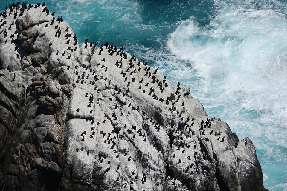 Ocean, Birds, Rocks, Waves, Sea, Nature, Landscape