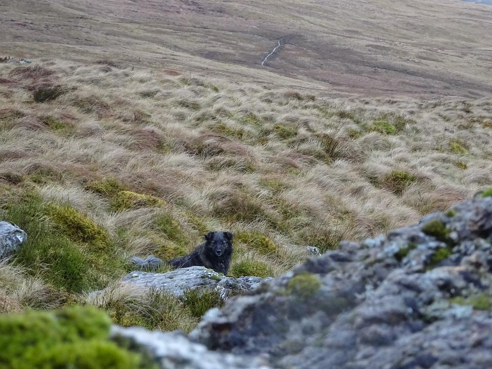 Rocks, Dog, Countryside, Moorland, Rock, Animal