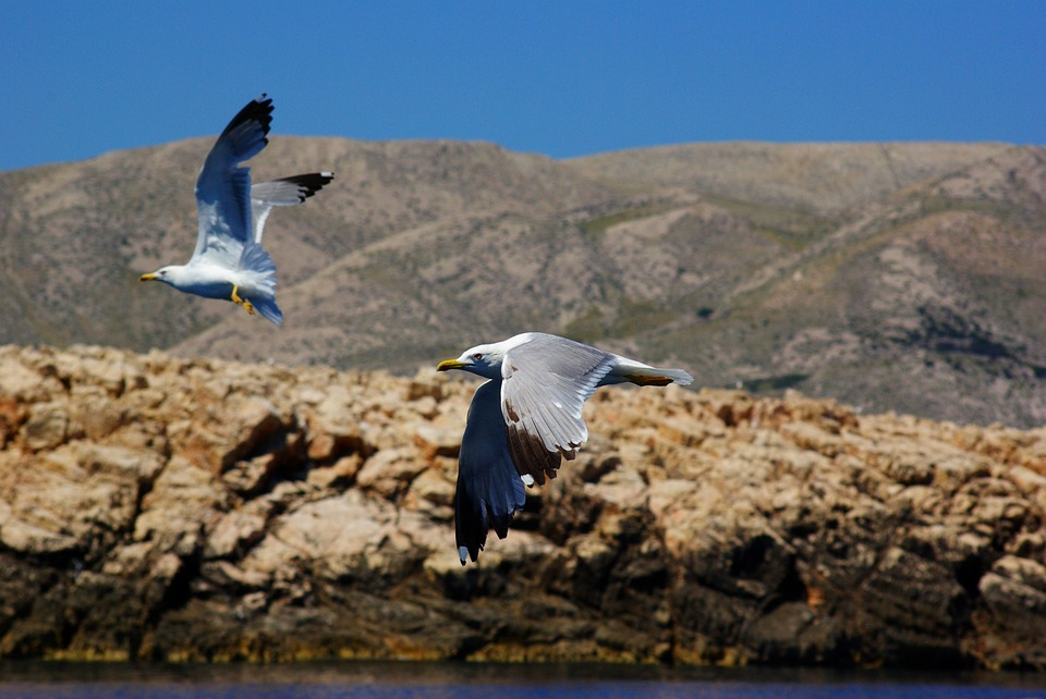 Sea, The Seagulls, Birds, Rocks, Nature, Travel