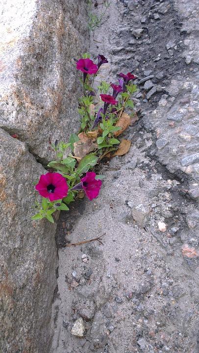 Force, Sidewalk, Flower, Rocks, Stones, Wall