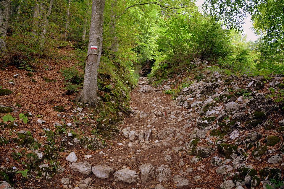Trail, Steep, Rocks, Forest, Rock, Mountains, Excursion