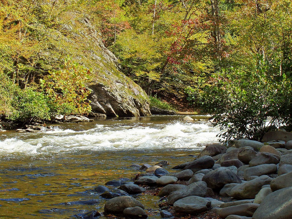 Rocky, River, Forest, Trees, Nature, River Bed, Rapids