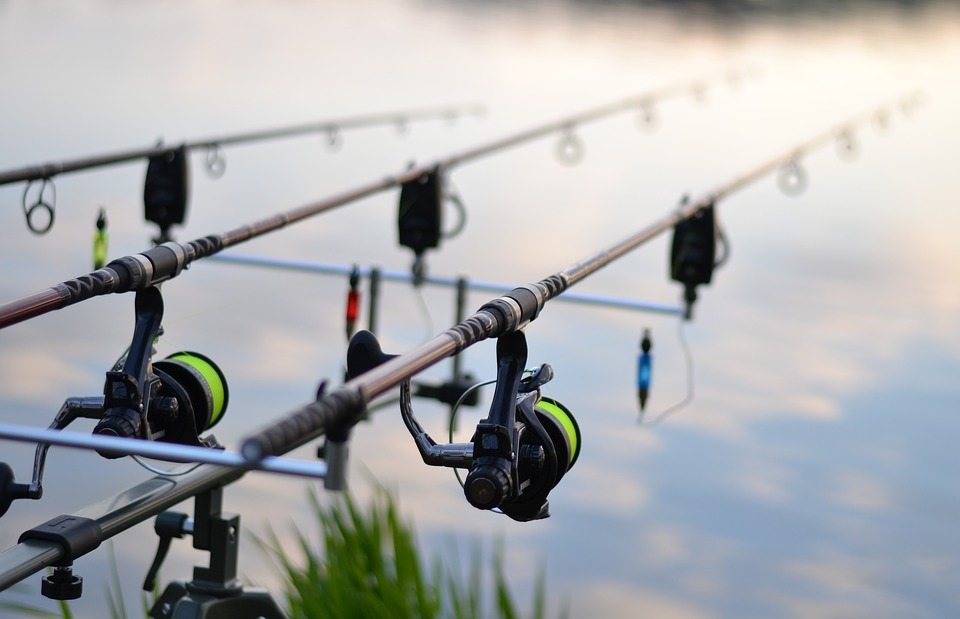 Fishing, Fish, Pond, Rybařina, Carp, Recreation, Rod