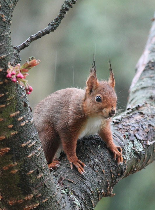Squirrel, Rodent, Nager, Animal, Cute, Animal World