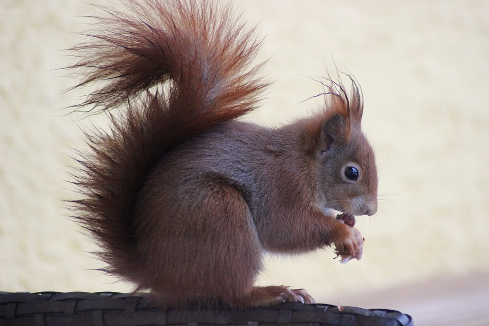 Mammal, Squirrel, Cute, Rodent, Animal World, Sit