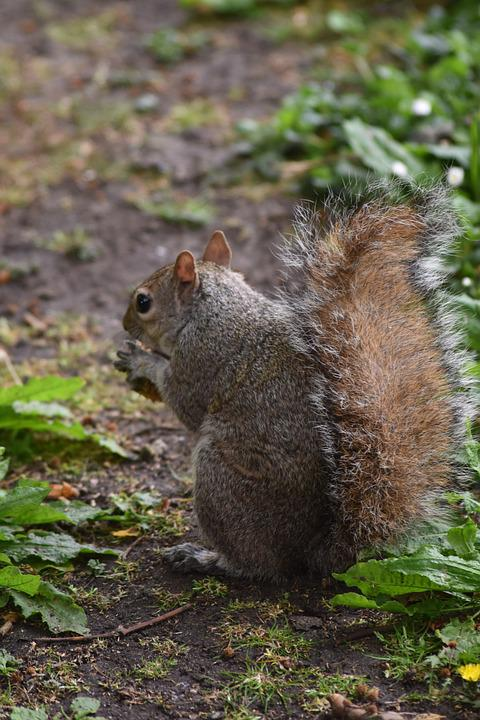 Nature, Rodent, Squirrel