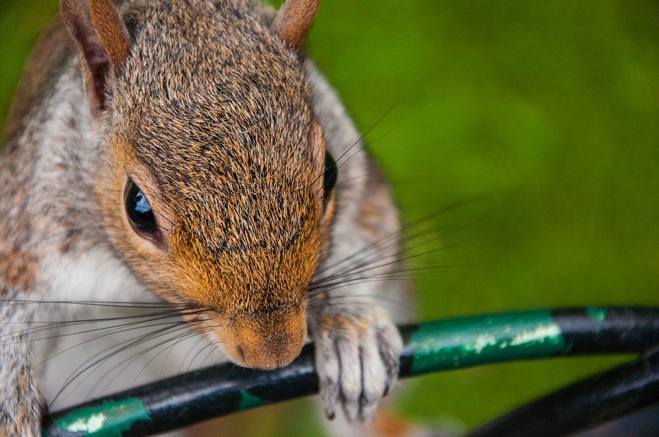Squirrel, Close Up, Park, London, Cute, Rodent
