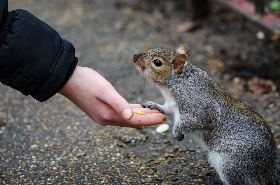 Friendship, Squirrel, Hand, Animal, Rodents, Fur