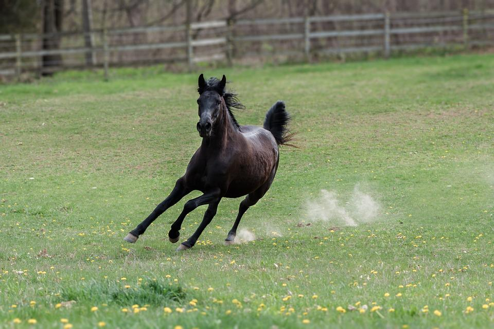 Horse, Speed, Animal, Rodeo, Gallop, Equine, Equestrian