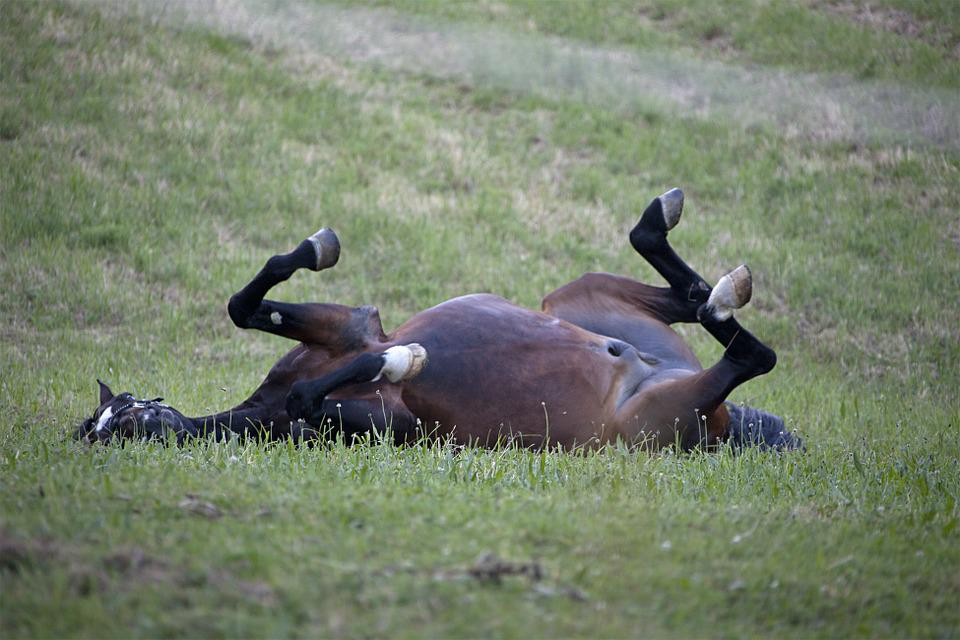 Horse, Mare, Rolling, Meadow, Wälzend, Pasture