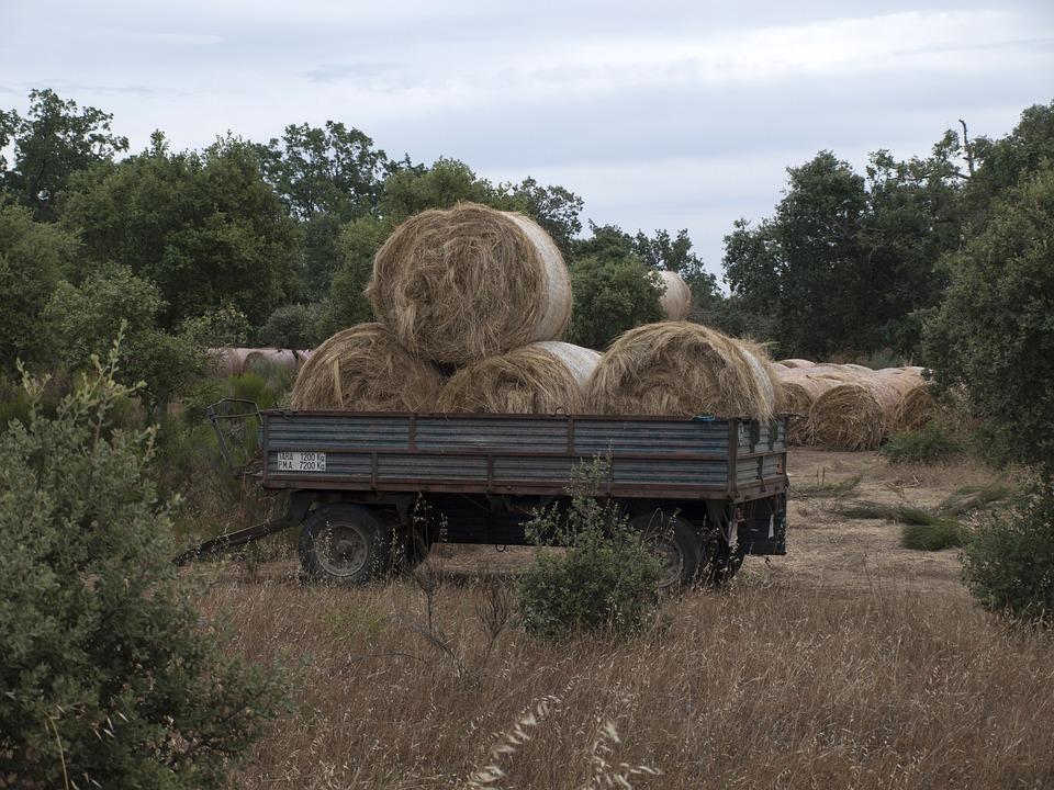 Hay, Forage, Rolls Of Hay, Hay Cut, Agriculture