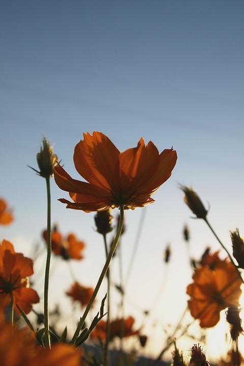 Flowers, Flower, Plant, Romance, A Bouquet Of Flowers