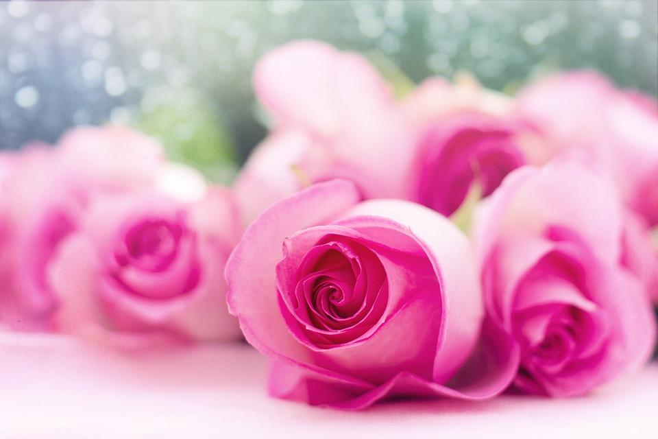 free photo romance flowers pink roses roses love romantic max pixel