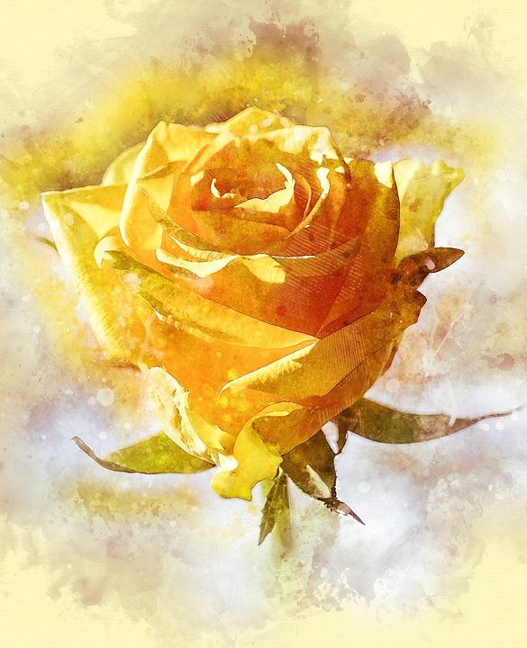 Rose, Flower, Petal, Love, Romance, Anniversary, Gift