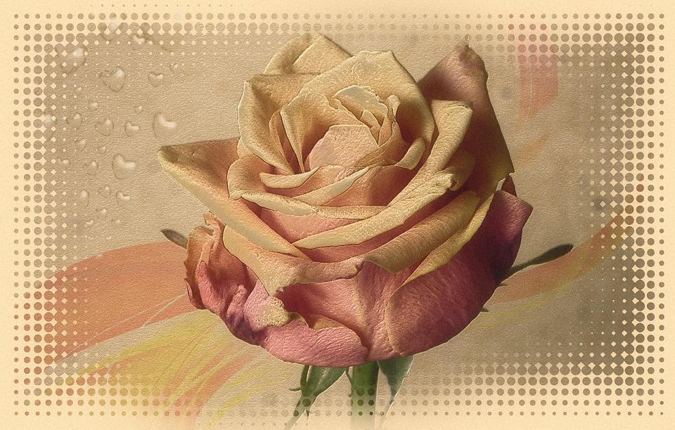 Rose, Love, Luck, Romance, Romantic, Loyalty, Tender