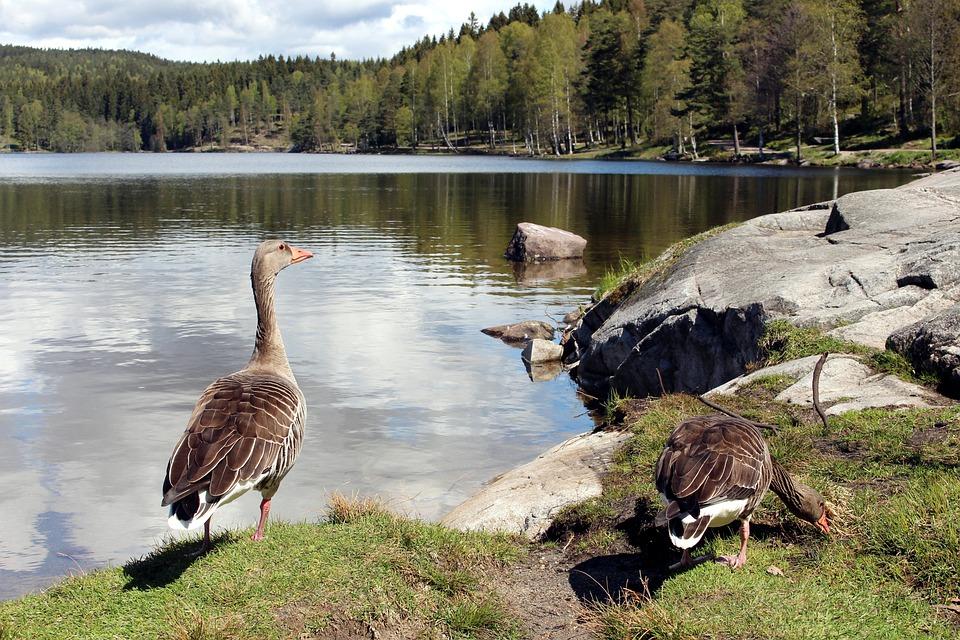 Oslo, Nordmarka, Sognsvann, Visitoslo, Rest, Romance