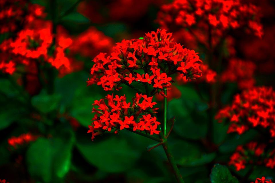 Flowers, Nature, Blossom, Romantic, Petals, Spring
