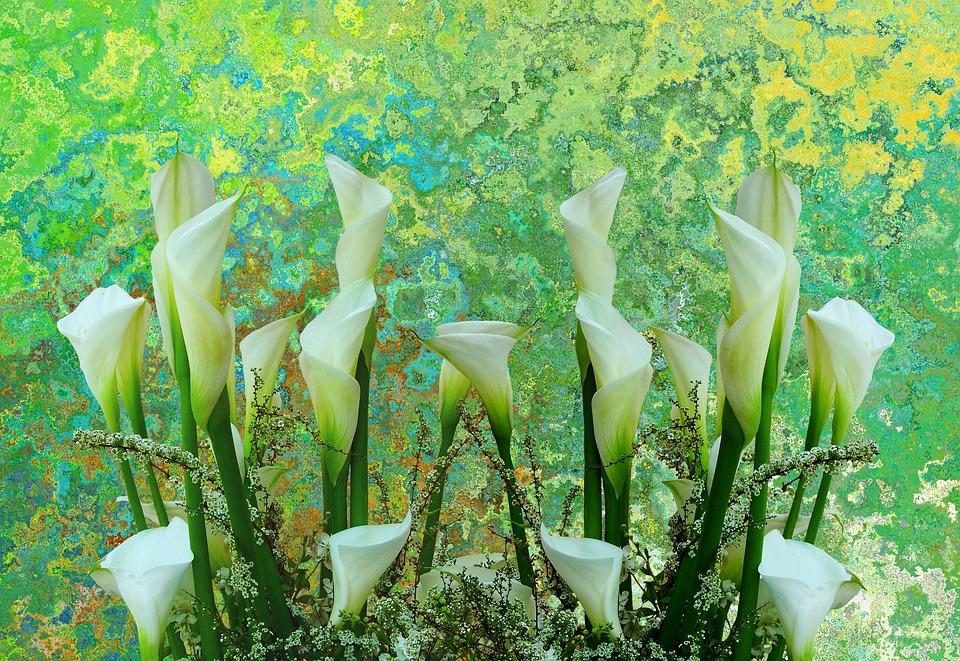 Callas, Flowers, Cut Flowers, Arrangement, Romantic