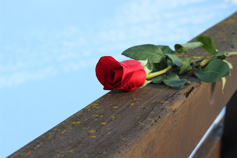 Red Rose On Bridge Fence, Love, Frozen Lake, Romantic