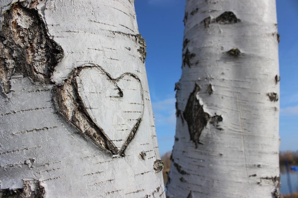 Love, Birch, Heart, Wood, Wedding, Romantic, Tree