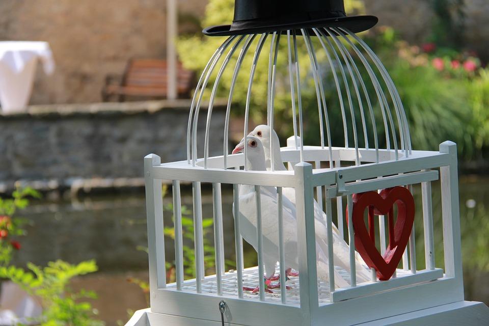 Pigeons, Wedding Doves, Love Doves, Wedding, Romantic