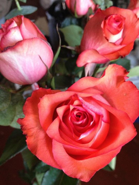 Roses, Love, Red, Romantic, Bouquet, Flower, Romance