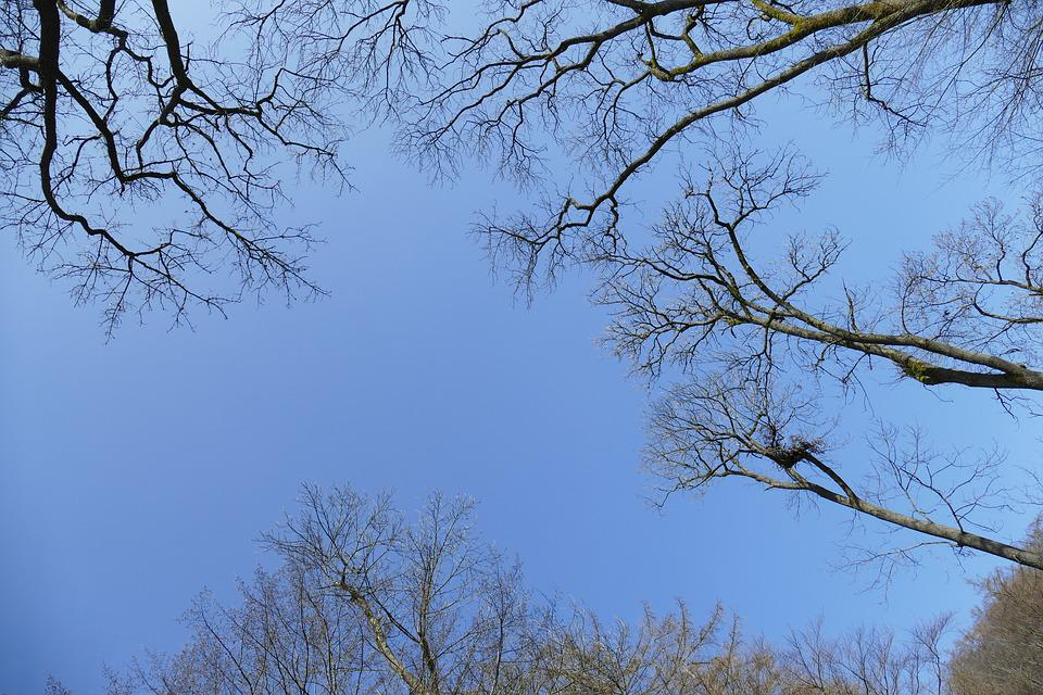 Sky, Idyllic, Forest, Spring, Romantic, Hiking