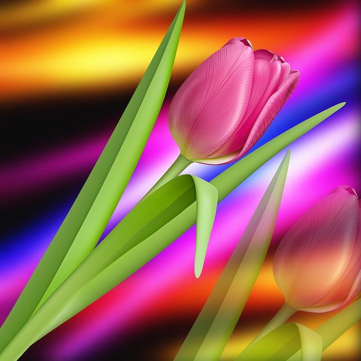 Nature, Tulip, Colors, Tulip Pink, Background, Romantic