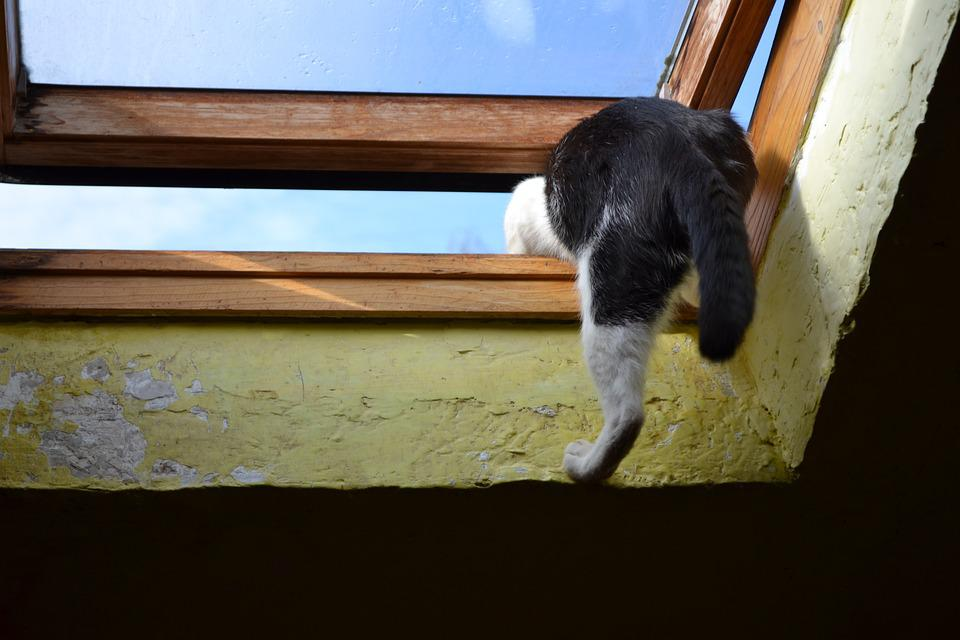 Kot, Climbs Through The Window, Out, Roof, Window
