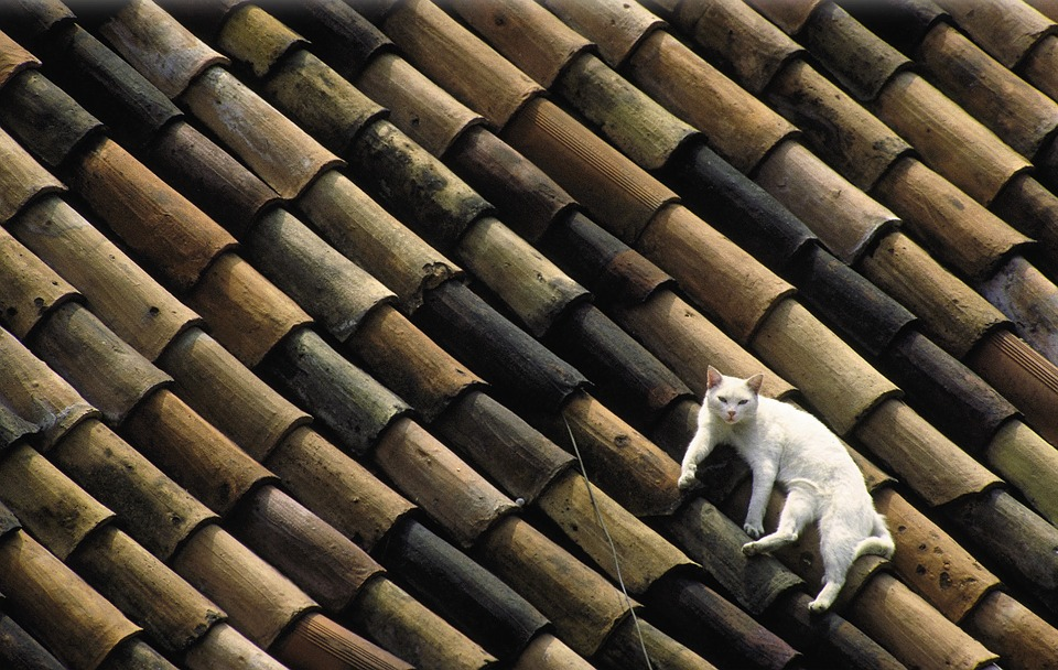 Cat, White, Roof, Tile, Lazing Around, Relax