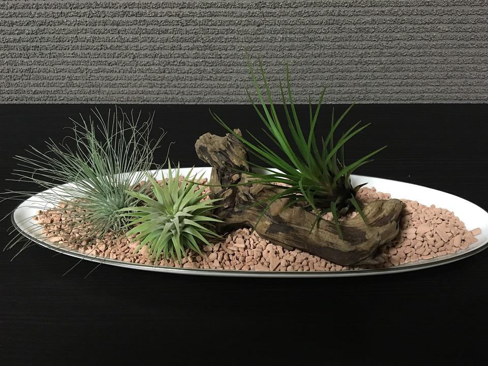 Air Plants, Foliage Plant, Room, Interior