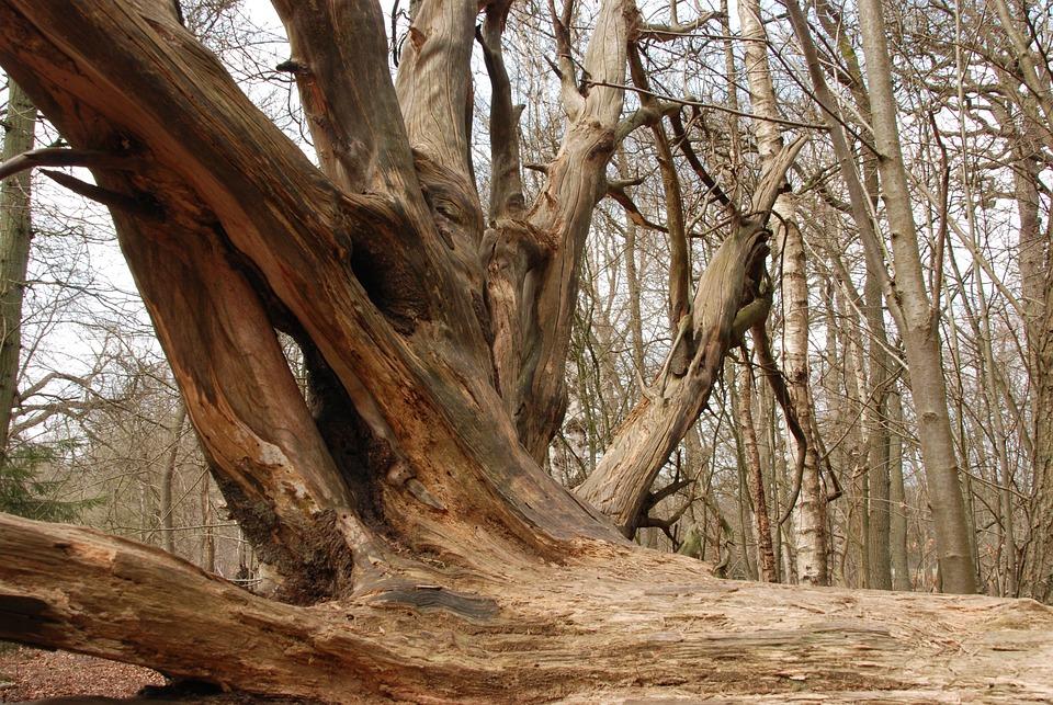 Tree, Root, Bald, Stump, Nature