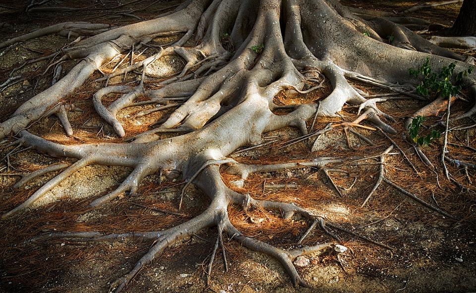 Roots Of The Tree, Root Of Tree, Wood, Bark, Tree