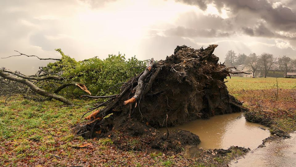 Tree, Uprooted, Storm, Rain, Earth, Roots, Wind, Nature