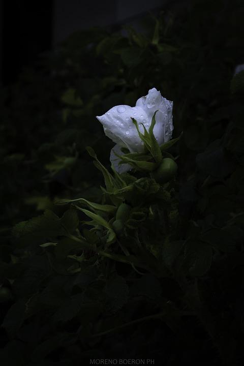 Rosa, Light, Atmosphere