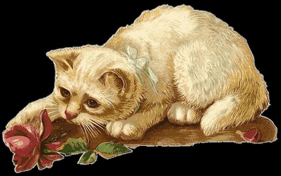 Cat, Kitten, Rosa, Flower, Animal, Pet, Vintage
