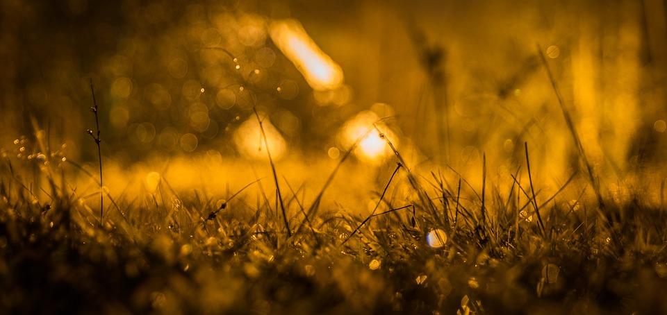 Night, Rain, Rosa, Grass, Bokeh, Drops