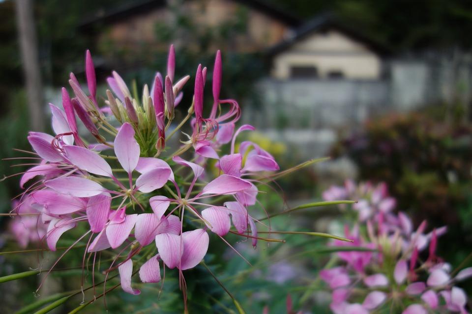 Flowers, Rosa, Nature, Spring, Flower, Romantica