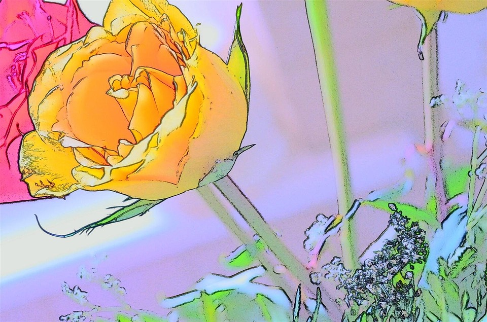 Rosa, Yellow, Art