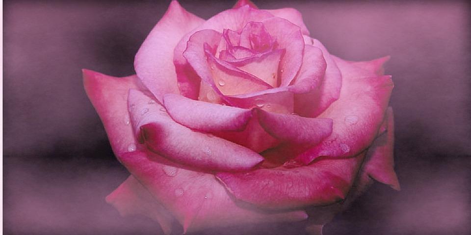 Rose, Rosaceae, Flower, Red, Thorns, Prickly, Bloom