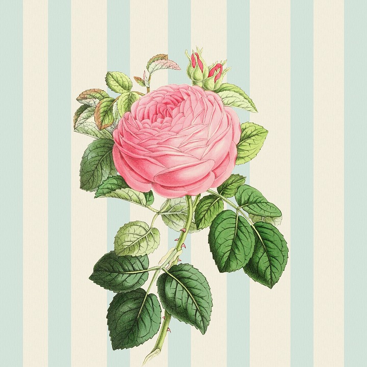 Background Rose Pink Vintage Shabby Chic Striped