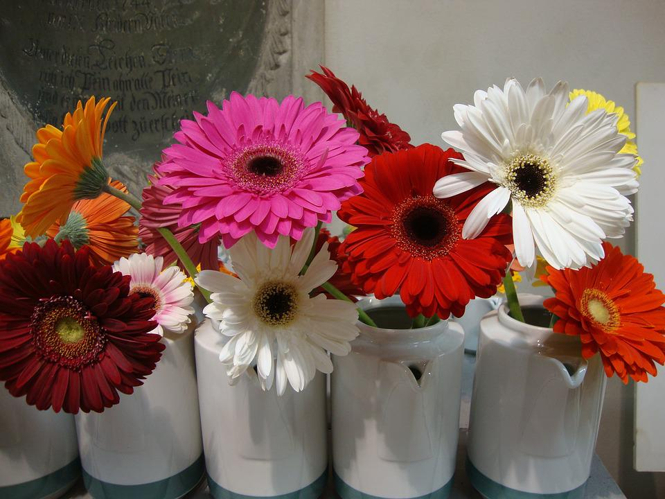 Gerbera, Flower, Blossom, Bloom, Rose, Red, Bloom