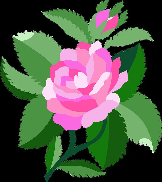 Rose, Plant, Bloom, Pink