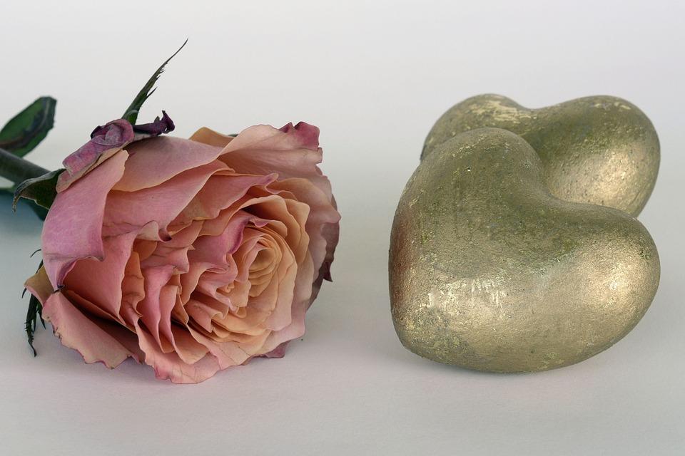 Rose, Salmon, Rose Bloom, Flower, Romantic, Love